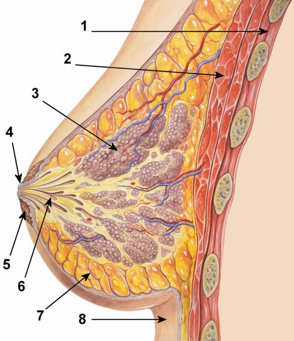 What happens if breast cancer spreads to other organs and is unoperable does it leave some kind of marks on the body?