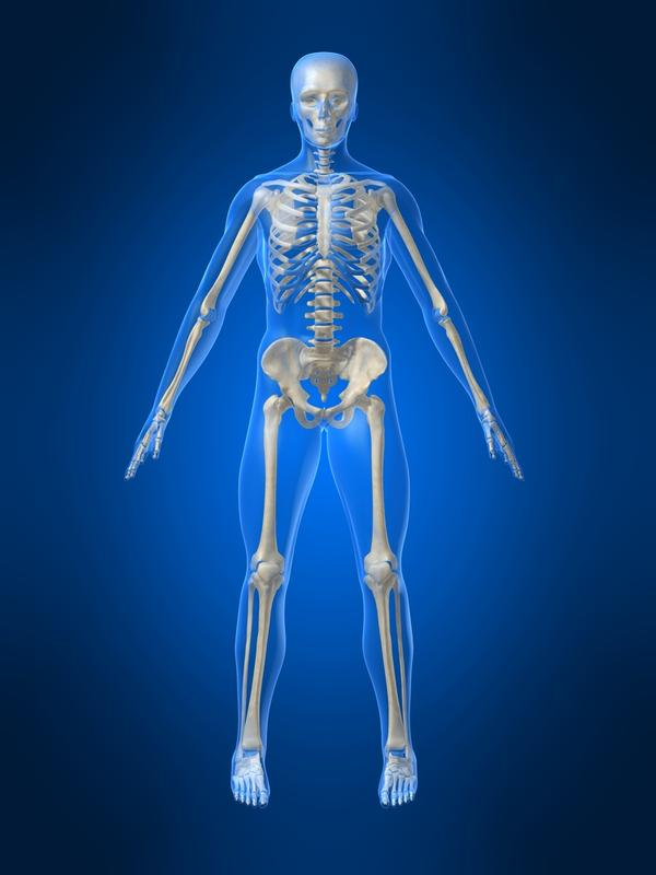 Do illegal drugs affect the skeletal system?