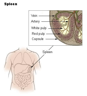My spleen has been removed. Then what is the effect of this spleen removal and what are the precautions for me that I should follow?