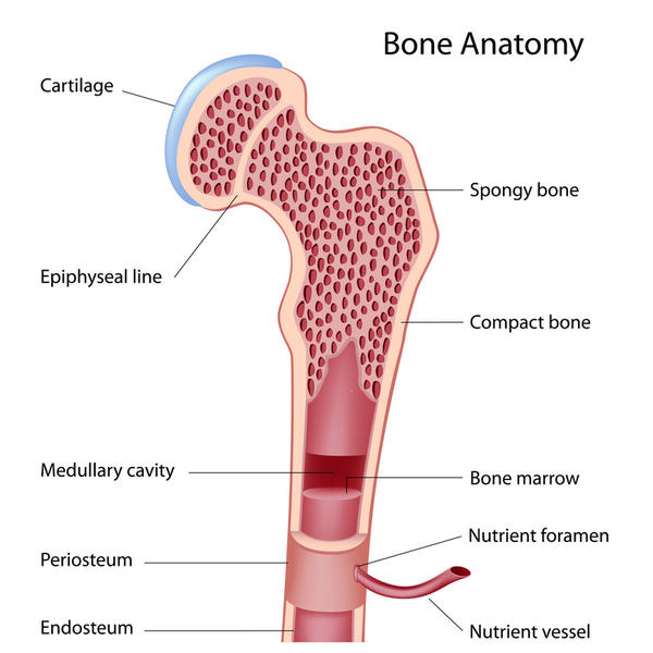 Do isoflavones affect male bone growth ?