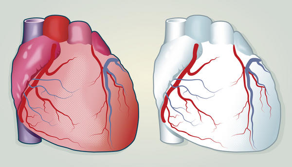 What do the coronary arteries and veins do?