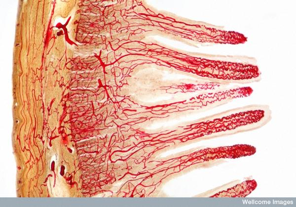 Hey 