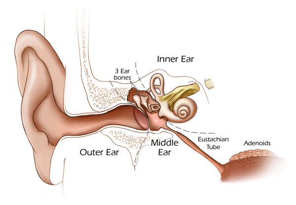 What are the symptoms of an ear infection in adults vs kids?