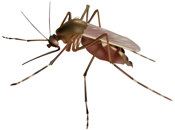 What are the presenting symptoms of a west nile virus infection?