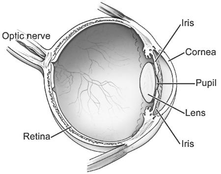 What can cause sudden loss of vision in the lower half of one eye?