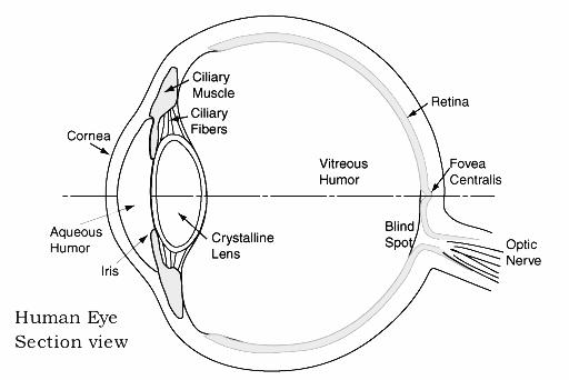 What compounds are found in the eye drops used to dilate your eyes in eye examinations?