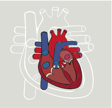 Is cardiac enlargement reversible?