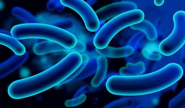 Which bacteria are good for us?