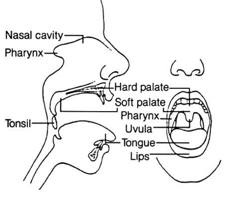 What happens if you inhale saliva?