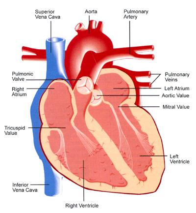 Is it true that a build-up of fluid in the lungs will result in a reduced amount of oxygen in the blood returning to the heart?