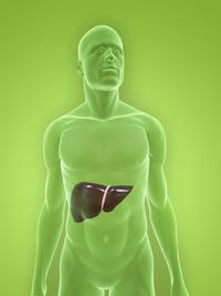 What happens if you have an enlarged liver?