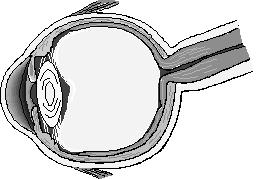 """slow eye"", tunnel-like vision, and other vision changes after possible optic nerve and brain damage, can it be fixed?"