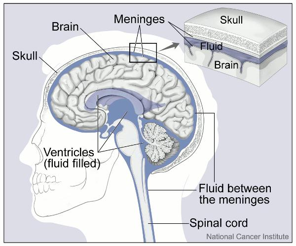 Why are there no lymphatic vessels in the left side of the brain?