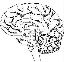 What is the cause of brain lesions? What are the symptoms?