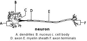 How does motor neuron disease progress?