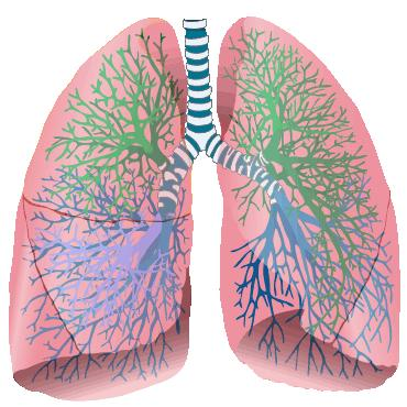 What would a v/q scan tell a doctor about air flow through an affected part of the lung?