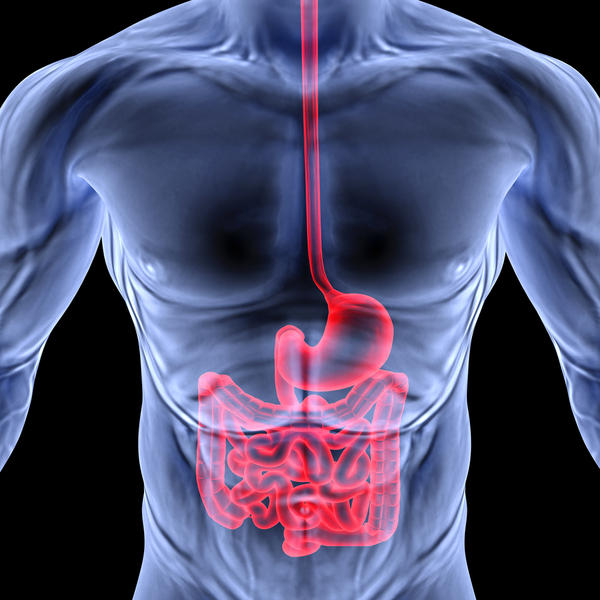 What are the six parts of the digestive tract?