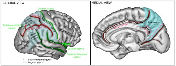 What to do to improve the function of the frontal lobe of the brain?