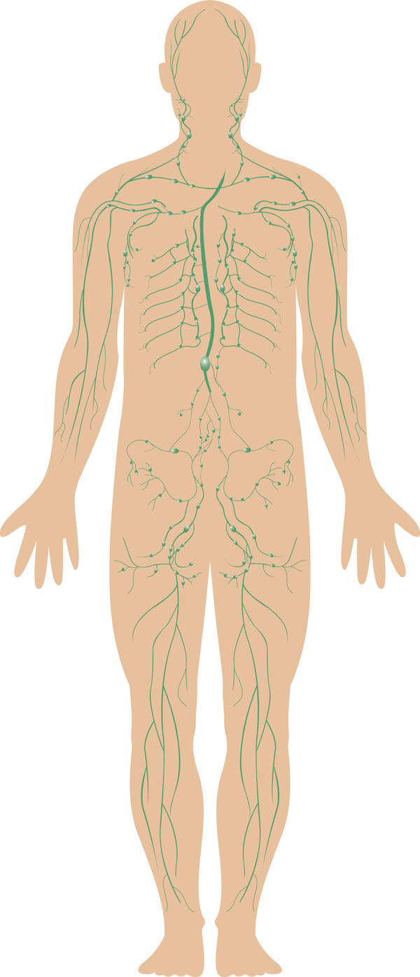 What are the functions of the lymphatic system for toxins?