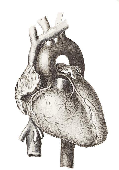 Are all ultrasound scans of the heart called heart echo's?