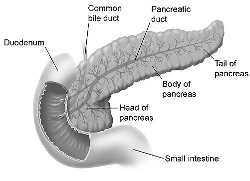 What can be a growth above the pancreas?