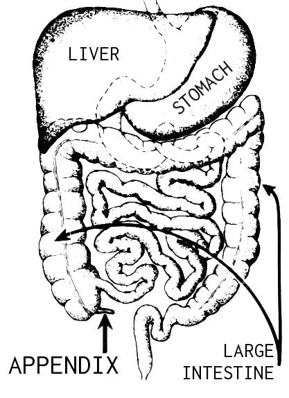 Burning pain in lower right stomach by the appendix and colon?