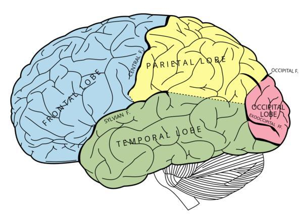 How does tourette's affect the brain?
