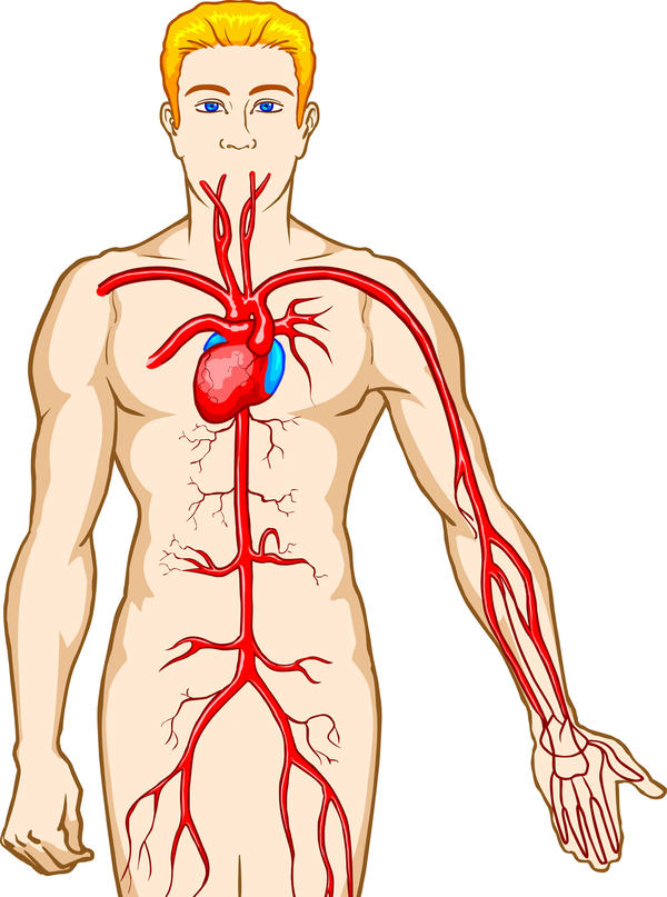 Does the composition of blood change as it passes through different parts of the body (e.g. the intestines and the lungs)?