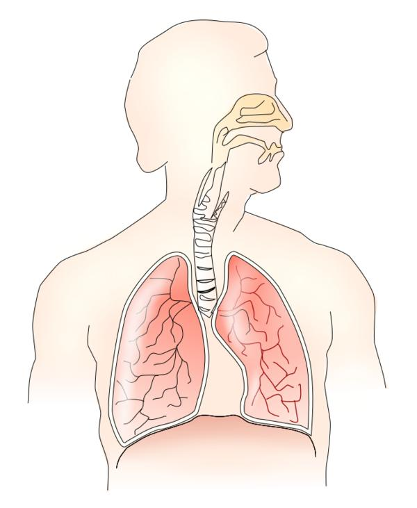 How does the respiratory system and the nervous system depend on each other?