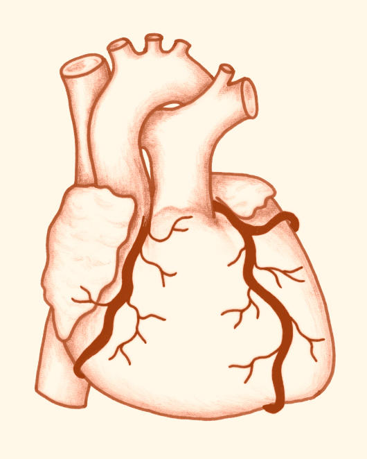 What is non rheumatic mitral valve disease?