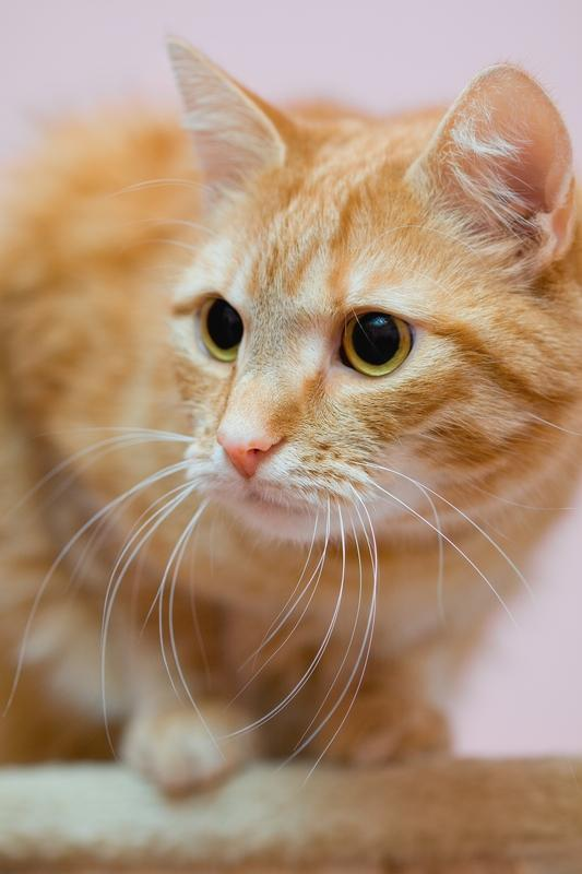 Can kids catch fleas from household pets?