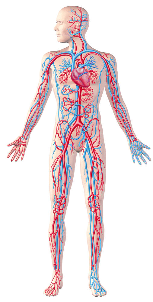 How to improve circulatory system?
