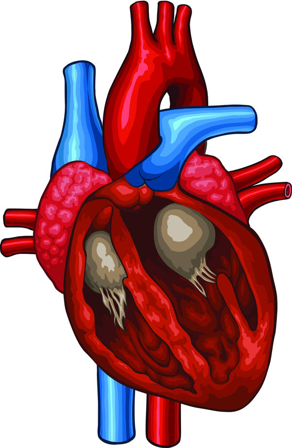 Can an athlete get an enlarged heart just by over training?