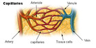 ; artery; vein; venule; arteriole; capillary Human immunodeficiency virus Blood Blood type O negative HIV