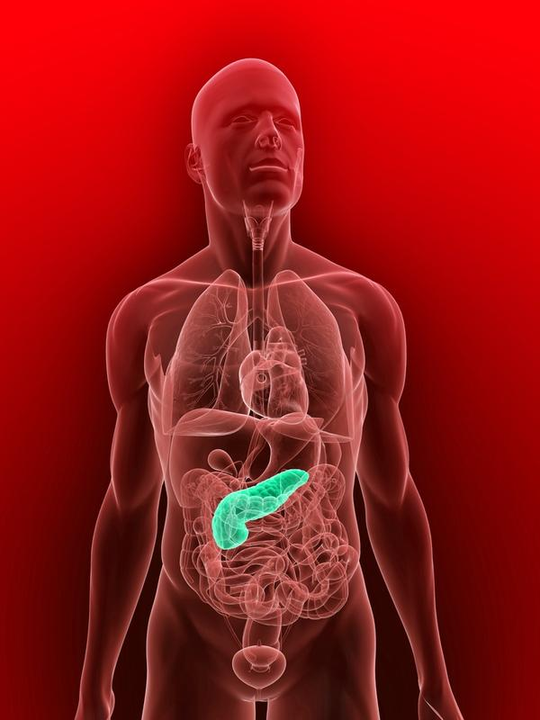 What type of gland is the pancreas?