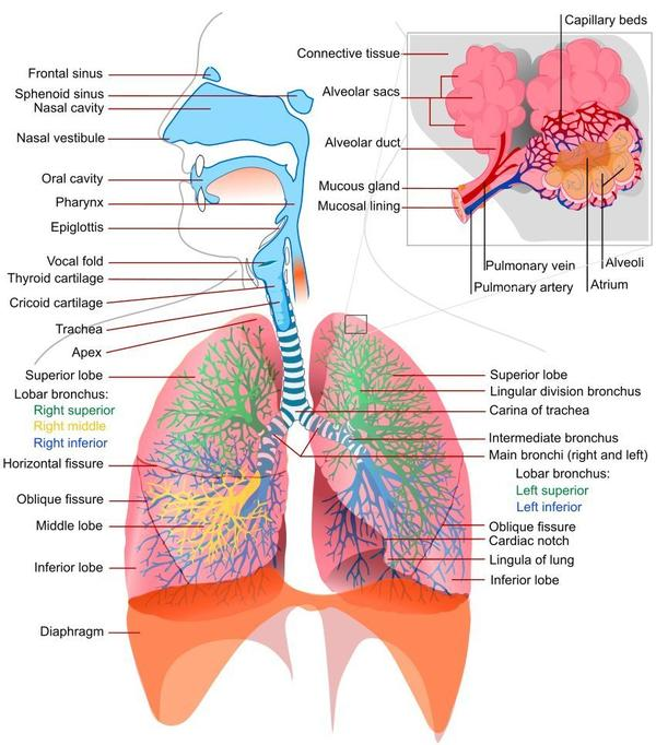 What is the definition or description of: respiratory tract infections?