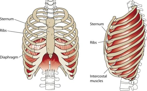 What are the symptoms of intercostal  rib pain in the back?