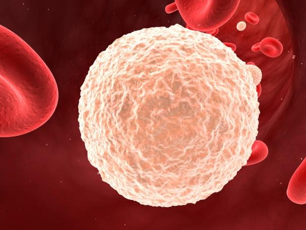 How can you increase your white blood cell count?