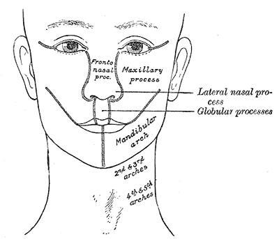 Anyone have experience with lumps on the head, not phrenology?