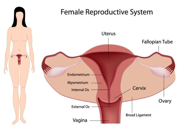 Can a rectocele block off menstruation blood?