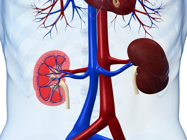 What does bulky kidney mean?