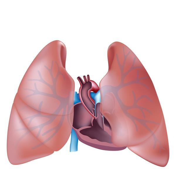 How are bronchitis and pneumonia different?