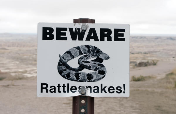 Which snake bite is most venomous? Coral snakes, rattlesnakes, copperheads, and the cottonmouth?