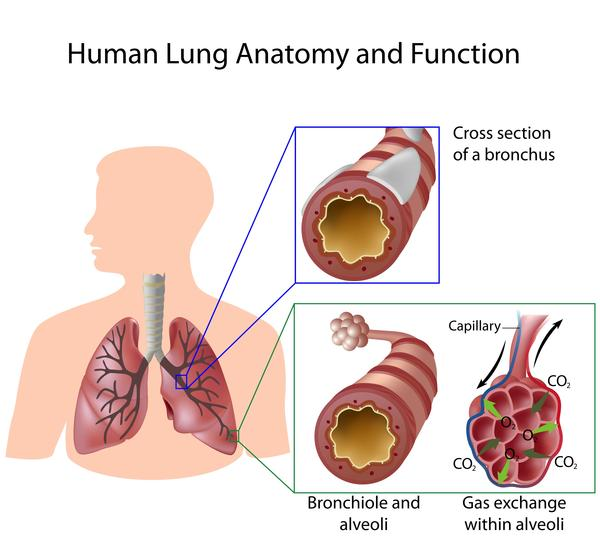 I ve bronciectasis, its in lower lobe, does this mean its a form of copd?