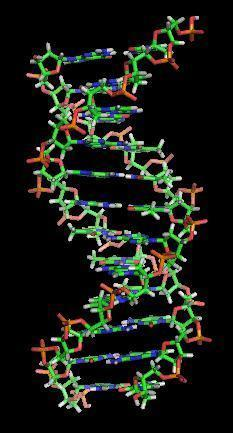Genes are made up of dna. true or false?
