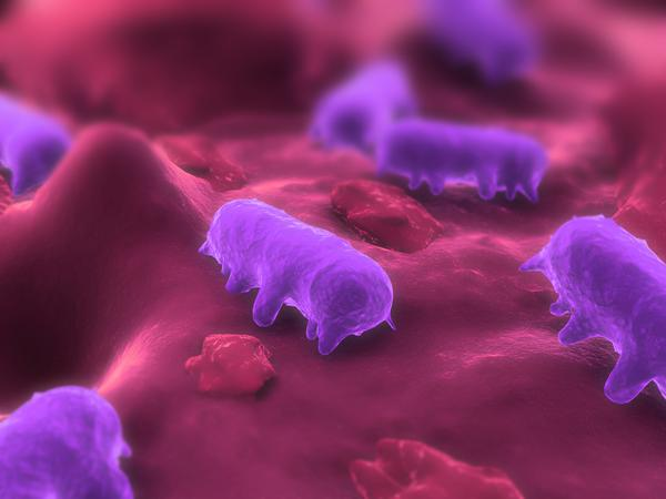 How does salmonella typhimurium attack and spread?