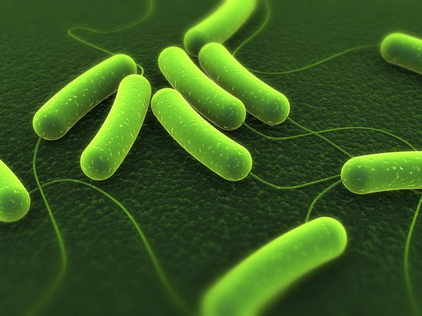 What is the treatment for e. Coli infection?