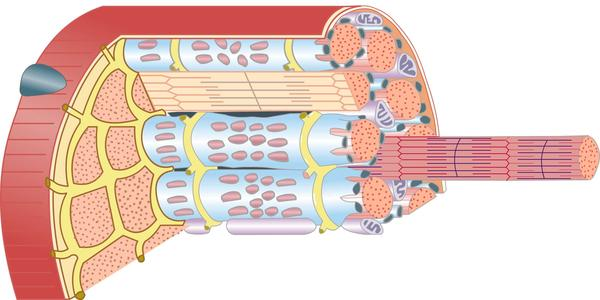 What to do if I have mitochondrial myopathy in my skeletal muscles. could it spread to other places of my body?