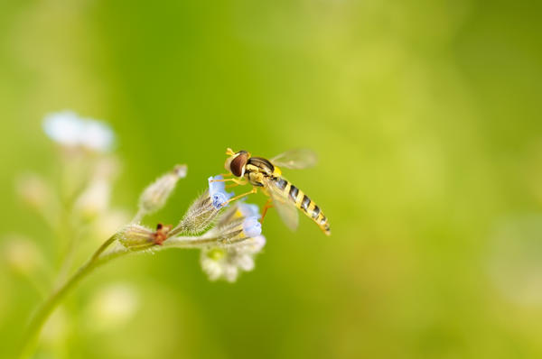 Does a yellow jacket allergy mean a wasp allergy?