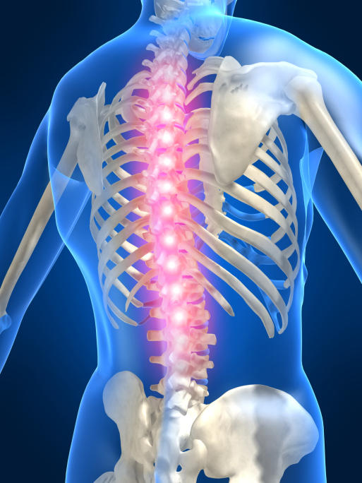 What does levoconvex curvature of the lower thoracic and lumbar spine mean?